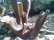 South Coast Tree Felling