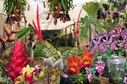 Stephward Estate Country House - Exotic Nursery